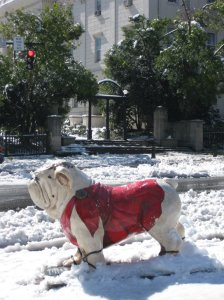 Spartan Dawg in front of UGA arches in 2 inches of snow. Photo by 'Benjamin'